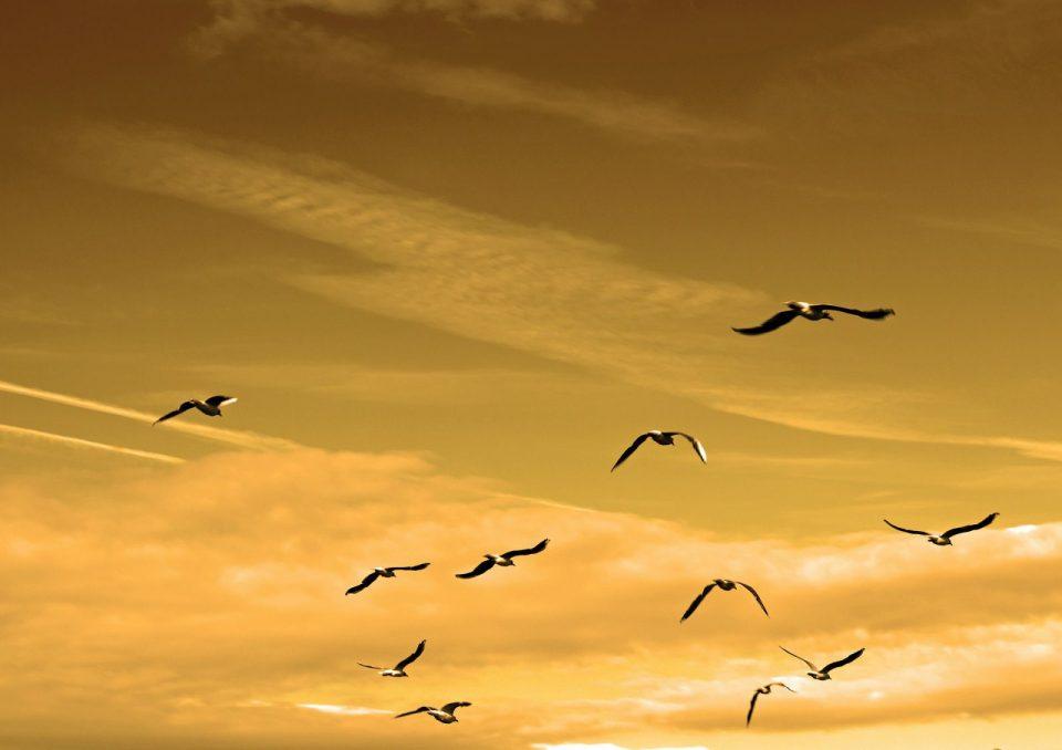 Ali per volare